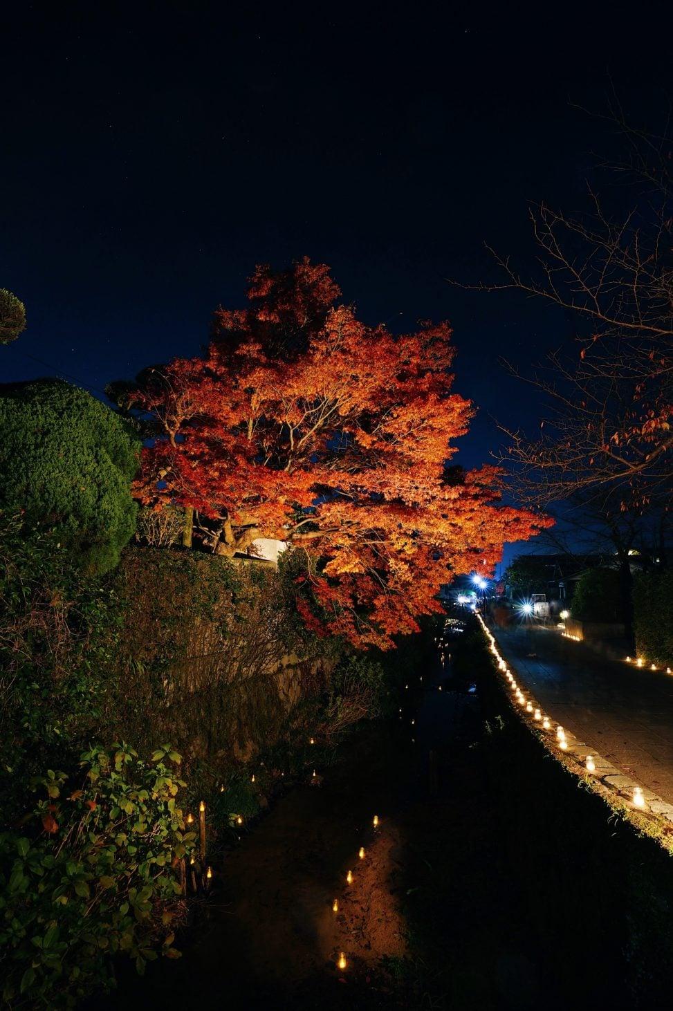 檀具川沿いの紅葉