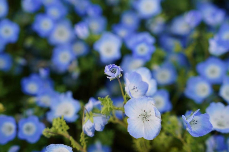 山陽小野田市花の海